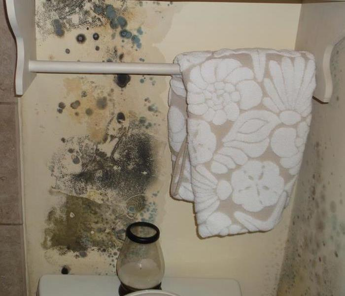 Mold Remediation Does Your North Rock County Home Have A Mold Problem?